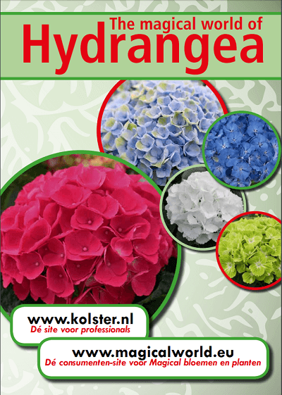 The magical world of Hydrangea