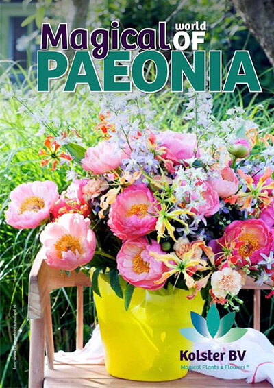 The magical world of Paeonia
