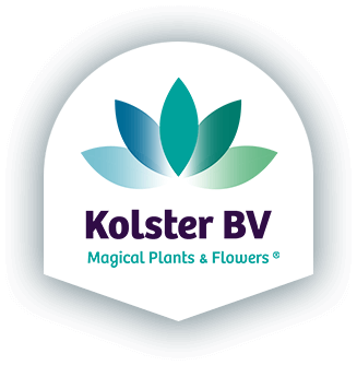 Kolster BV | Magical plants & Flowers